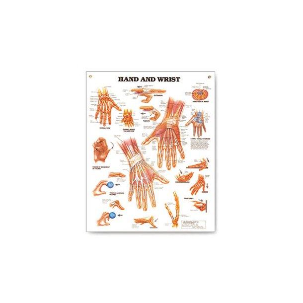 Planche - hånd og håndled