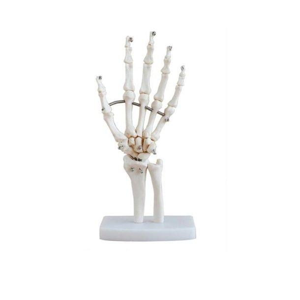 Skelet hånd - anatomisk model i plast