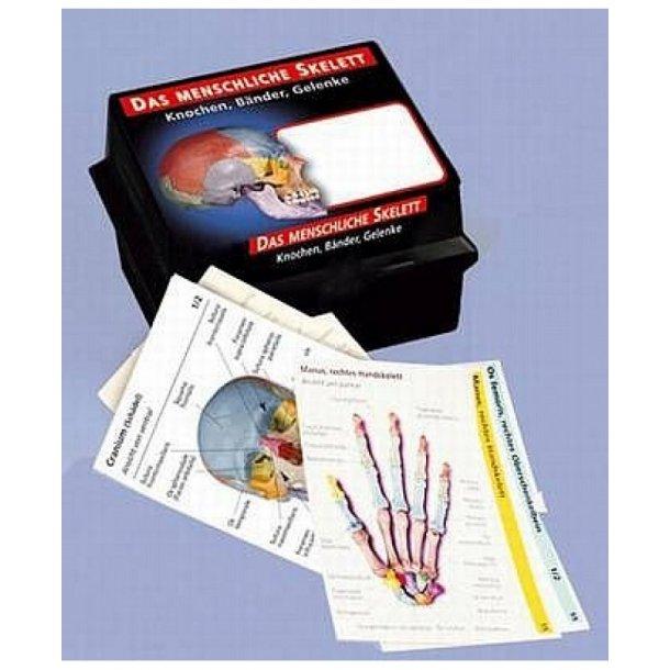 Anatomikort - skeletsystemet